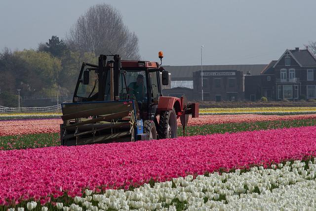 Flower field in Noordwijk - GowithOh