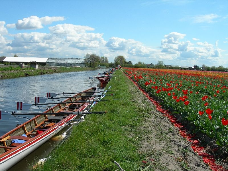 Flower field in de Zilk - GowithOh